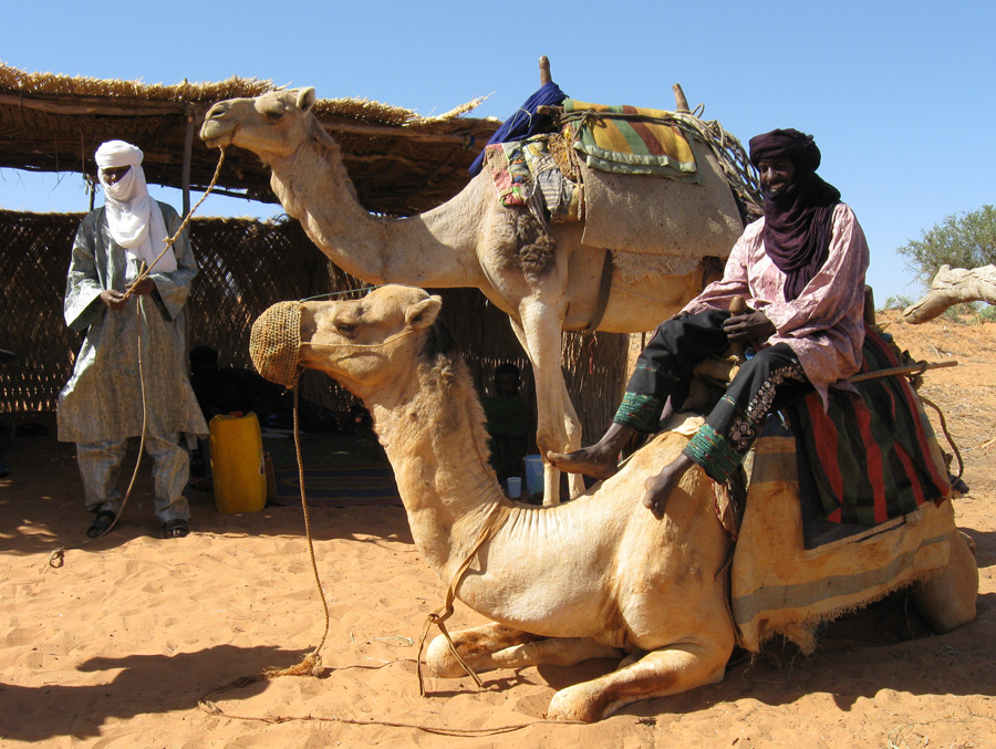 Trading Salt For Gold   A story of the Tuareg Nomads