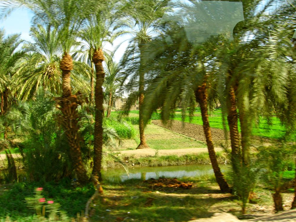 TenThousandVillages_Egypt_4
