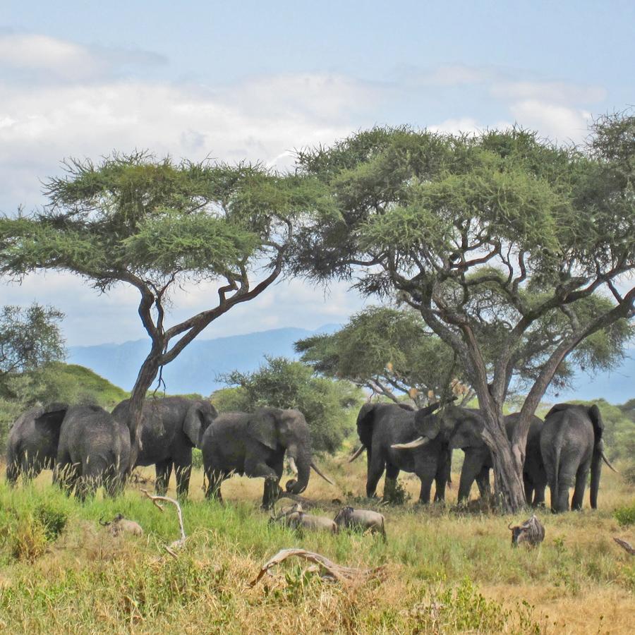 All things elephants. | Elephant Appreciation Day | Ten Thousand Villages #LiveLifeFair