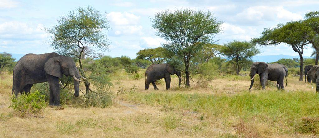 TenThousandVillages_Mosaic_Elephants_top