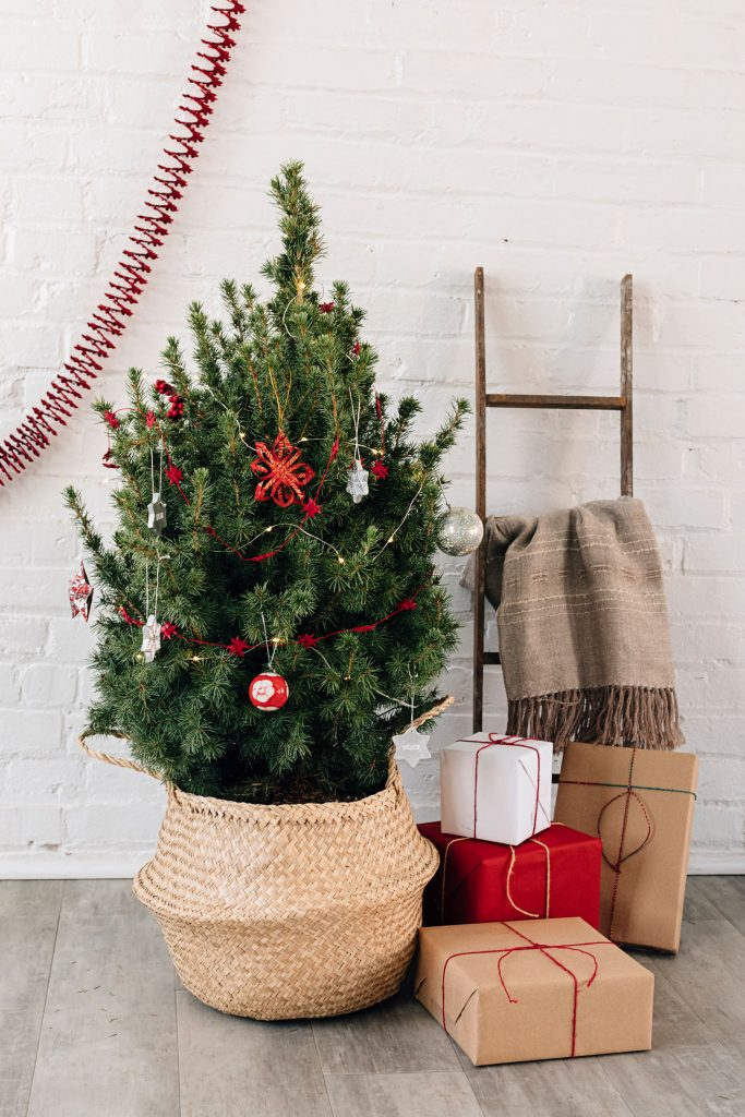 Sustainable Christmas | Fresh-cut Tree