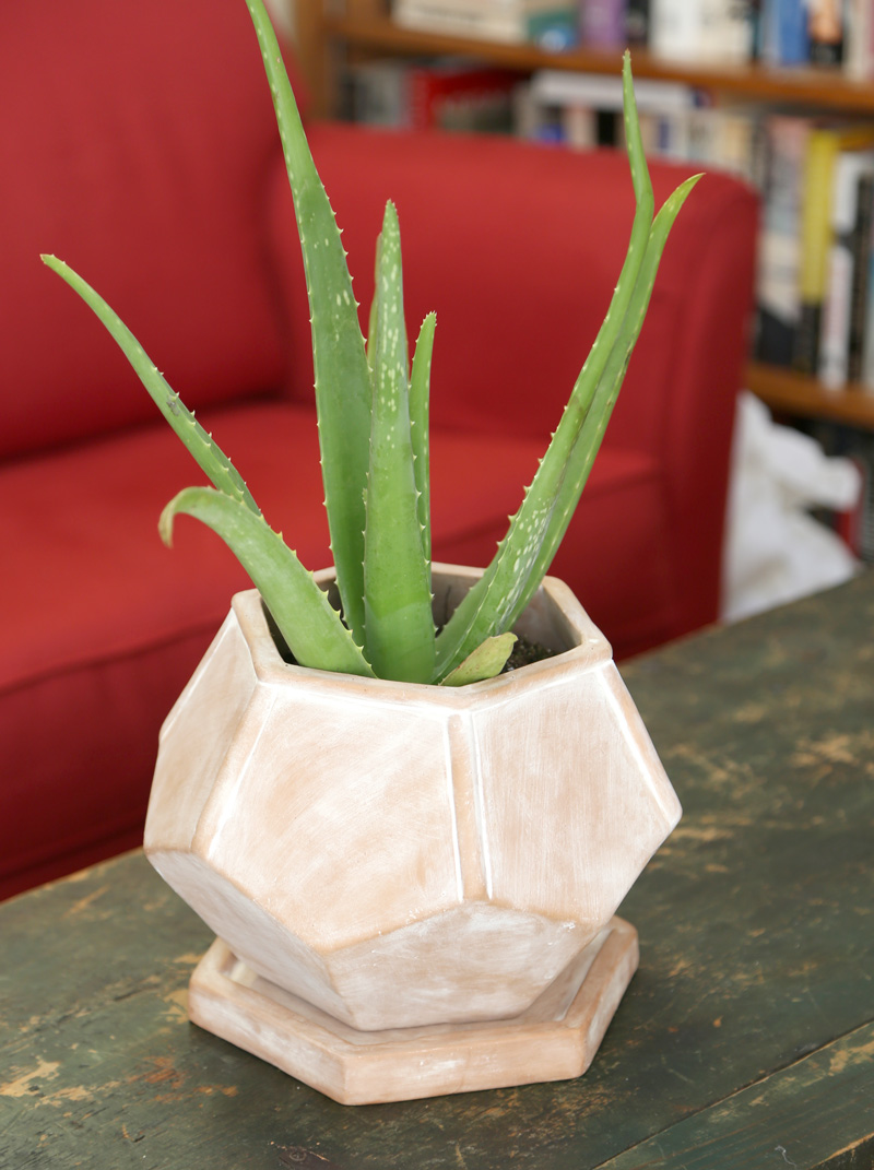 Snake Plant | Fair Trade Planter from Ten Thousand Villages — Your guide to happy healthy houseplants
