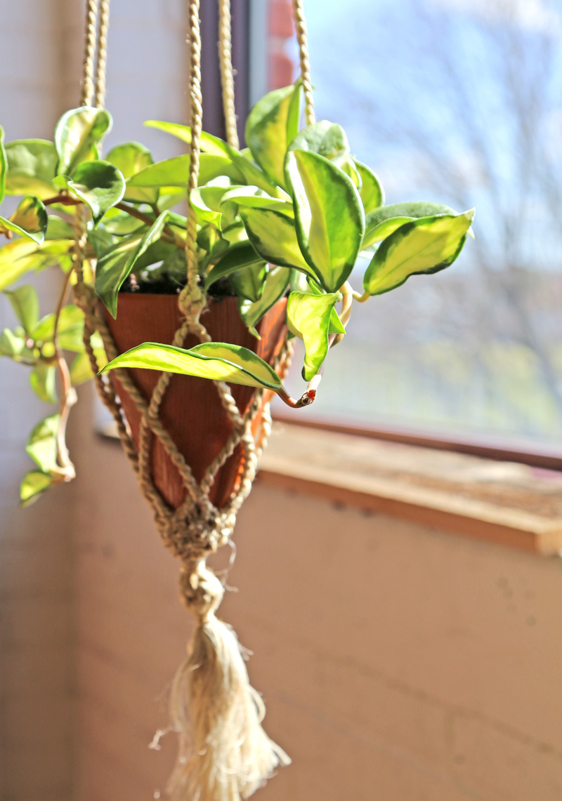 Hoya | Fair Trade Planter from Ten Thousand Villages — Your guide to happy healthy houseplants