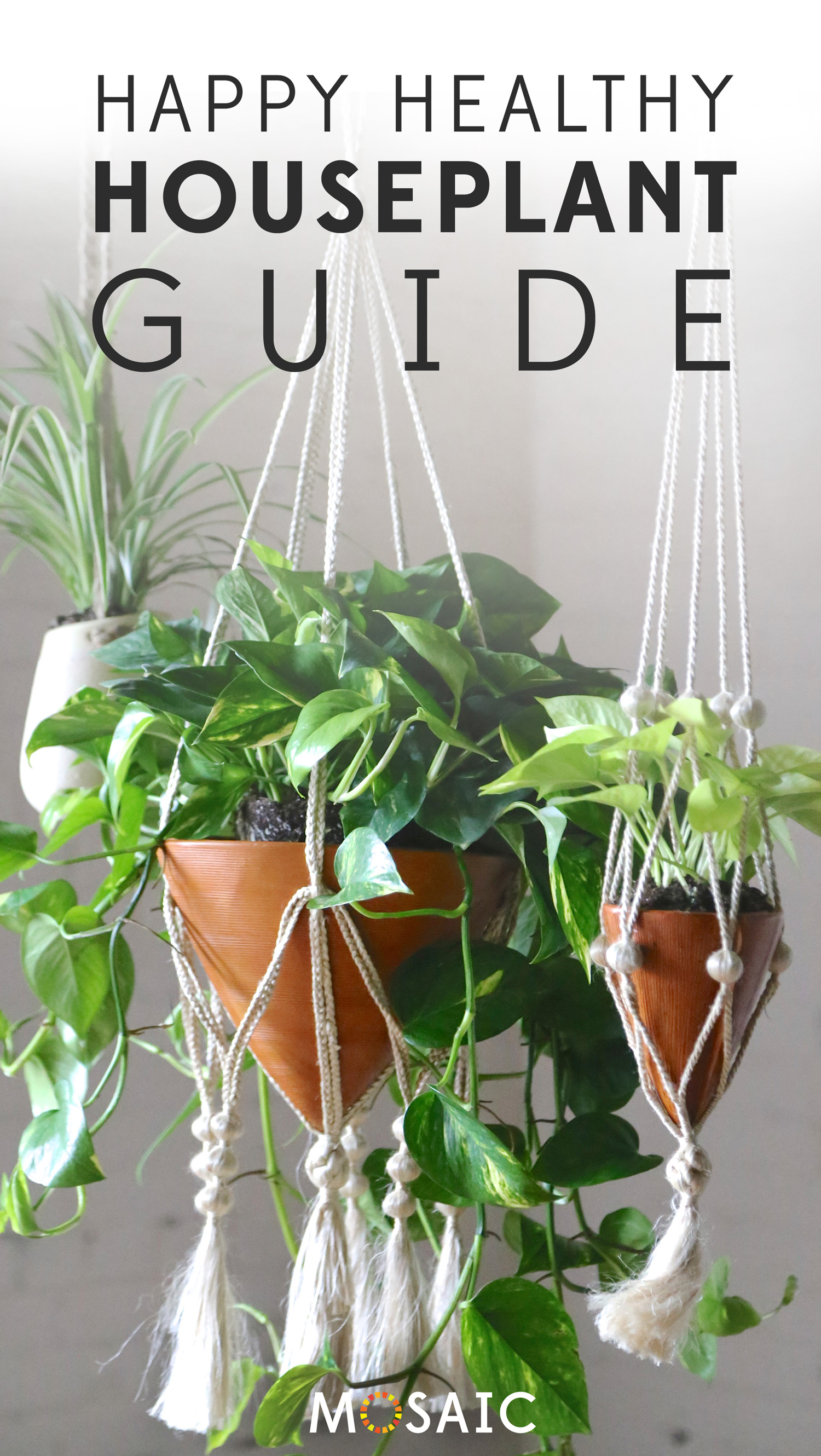 Snake Plant   Fair Trade Planter from Ten Thousand Villages — Your guide to happy healthy houseplants