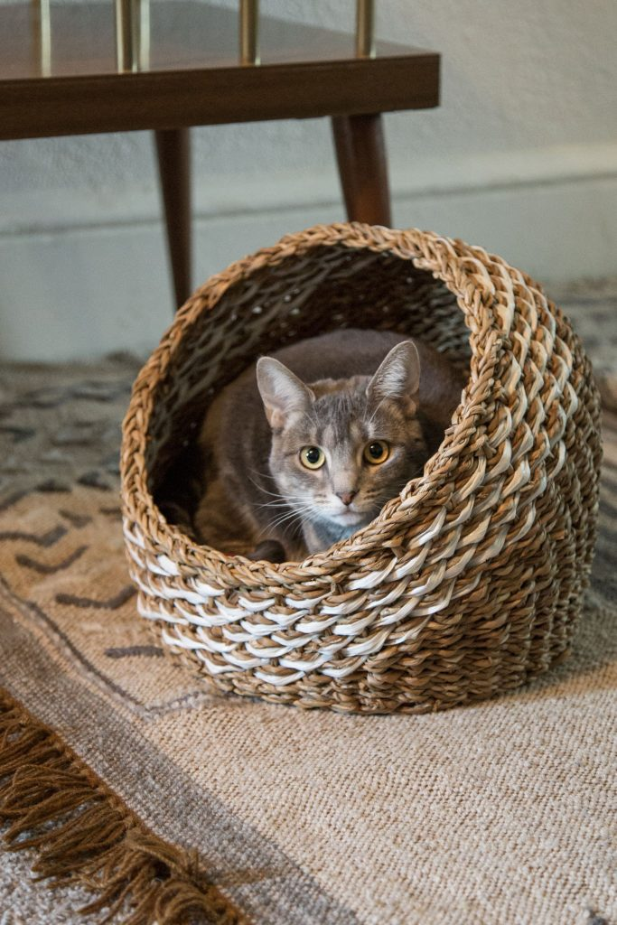First Christmas with a new pet | Recycled Sari Cat Bed