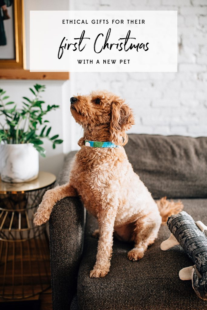 First Christmas with a new pet | Fetching Fabric Dog Collar