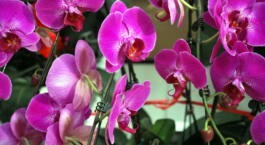 Radiant Orchid - 2014 Color of the Year